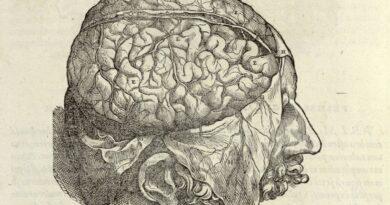 O fim das ilusões: terapia filosófica e neuropragmática